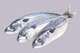Pesce Ragis Ristorazione collettiva